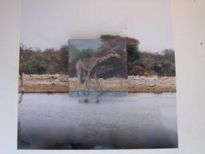 2012 - Giraffe