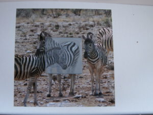 2012 - Zebra